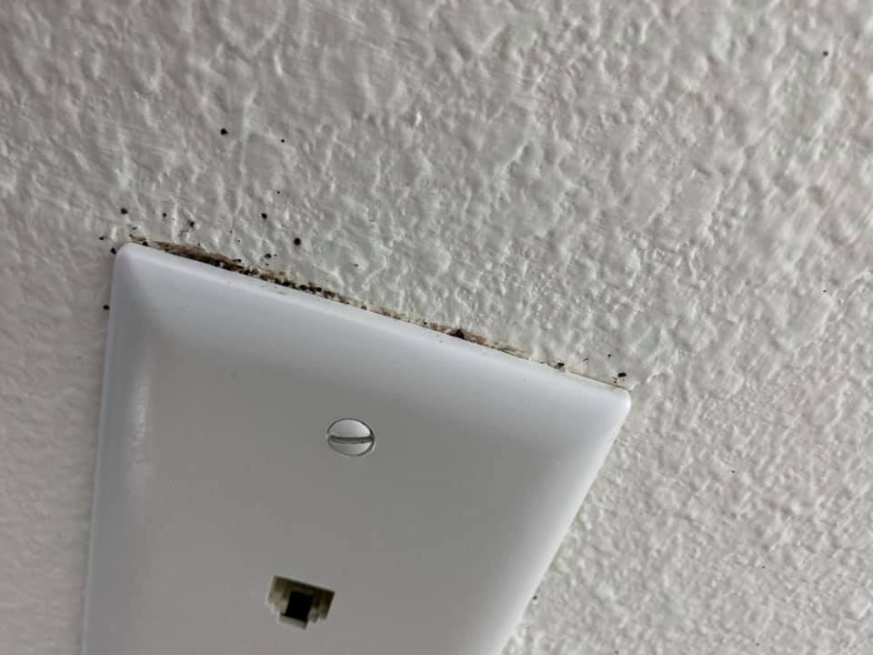 phone outlet with bed bug fecal matter behind it